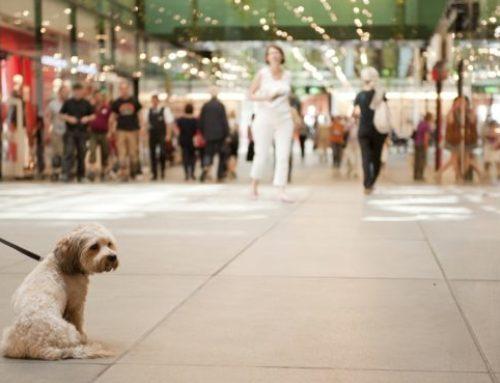 Sturz durch Hund vor Einkaufszentrum – Kann die Halterin zur Verantwortung gezogen werden?