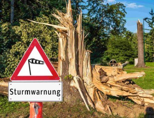 Umstürzen eines morschen Baumes – Haftung nach § 1319 ABGB?