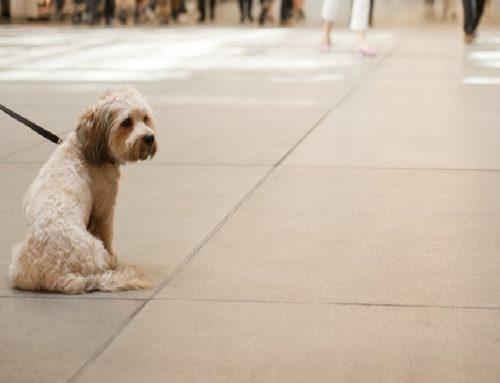 Geliebtes Haustier – Trotzdem ist der Hund kein Kind!